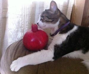 sny 75 cat